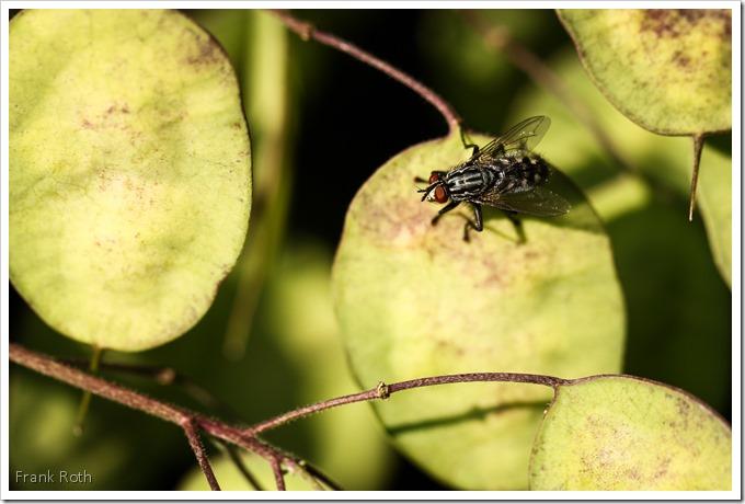 Fliege mit Wassertröpfchen auf dem Auge